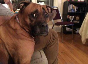 Почему собаки опасны для Samsung Galaxy S8?
