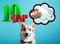ТОП 10 идей для заработка в интернете без навыков
