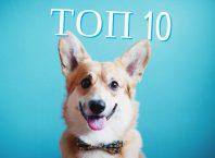 ТОП-10 лучших облачных хранилищ 2017 года
