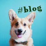 Какие блоги пользуются популярностью? Советы для начинающих блогеров