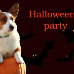 идеи для вечеринки на Хэллоуин 2017