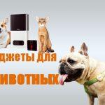 5 гаджетов для животных, которые помогут следить Вам за своими любимцем из любой точки мира