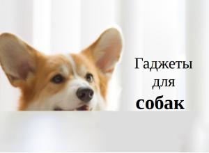 Гаджеты для собак 2017