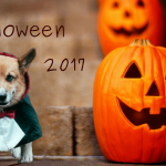 Идеи декора на Хэллоуин 2017м