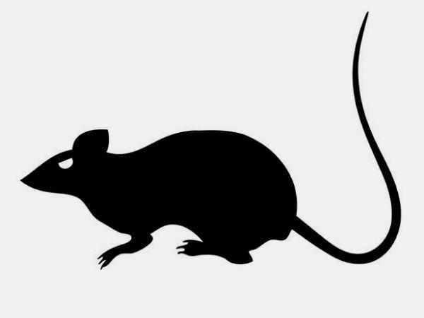 шаблон мышь на хэллоуин