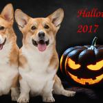 Идеи на Хэллоуин 2017