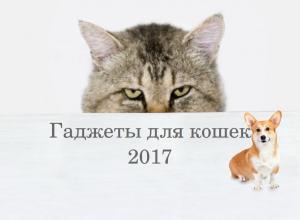 Гаджеты для кошек 2017