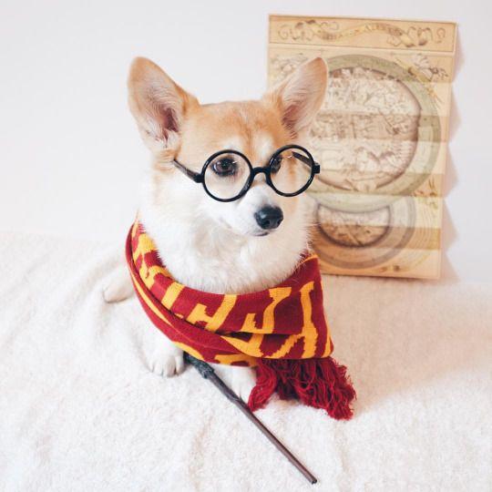 Гарри Поттер и искусственный интеллект