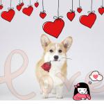 Гаджеты для девушек 2018: идеи подарков для любимой на 14 февраля
