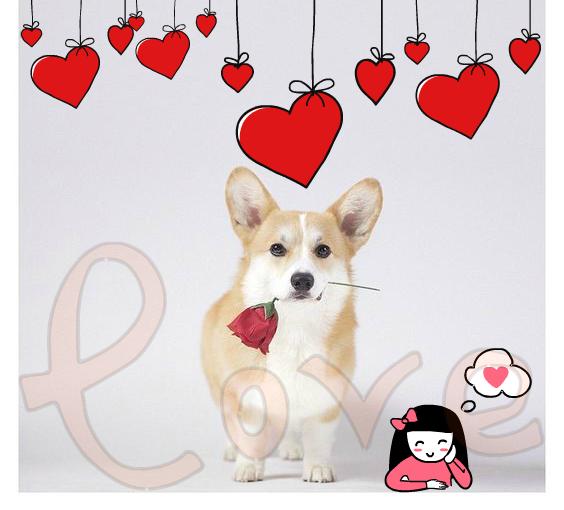 идеи подарков для любимой на 14 февраля