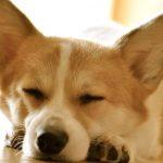 Лайфхаки на каждый день: как научиться вовремя ложиться спать