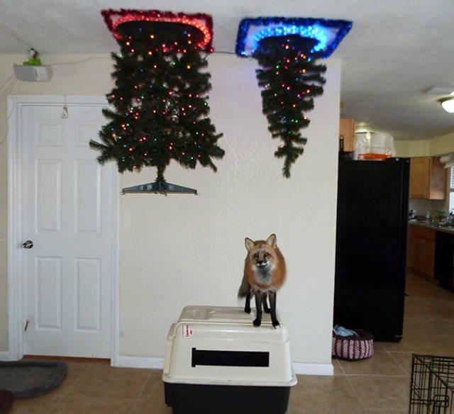 Елка на потолке от кота