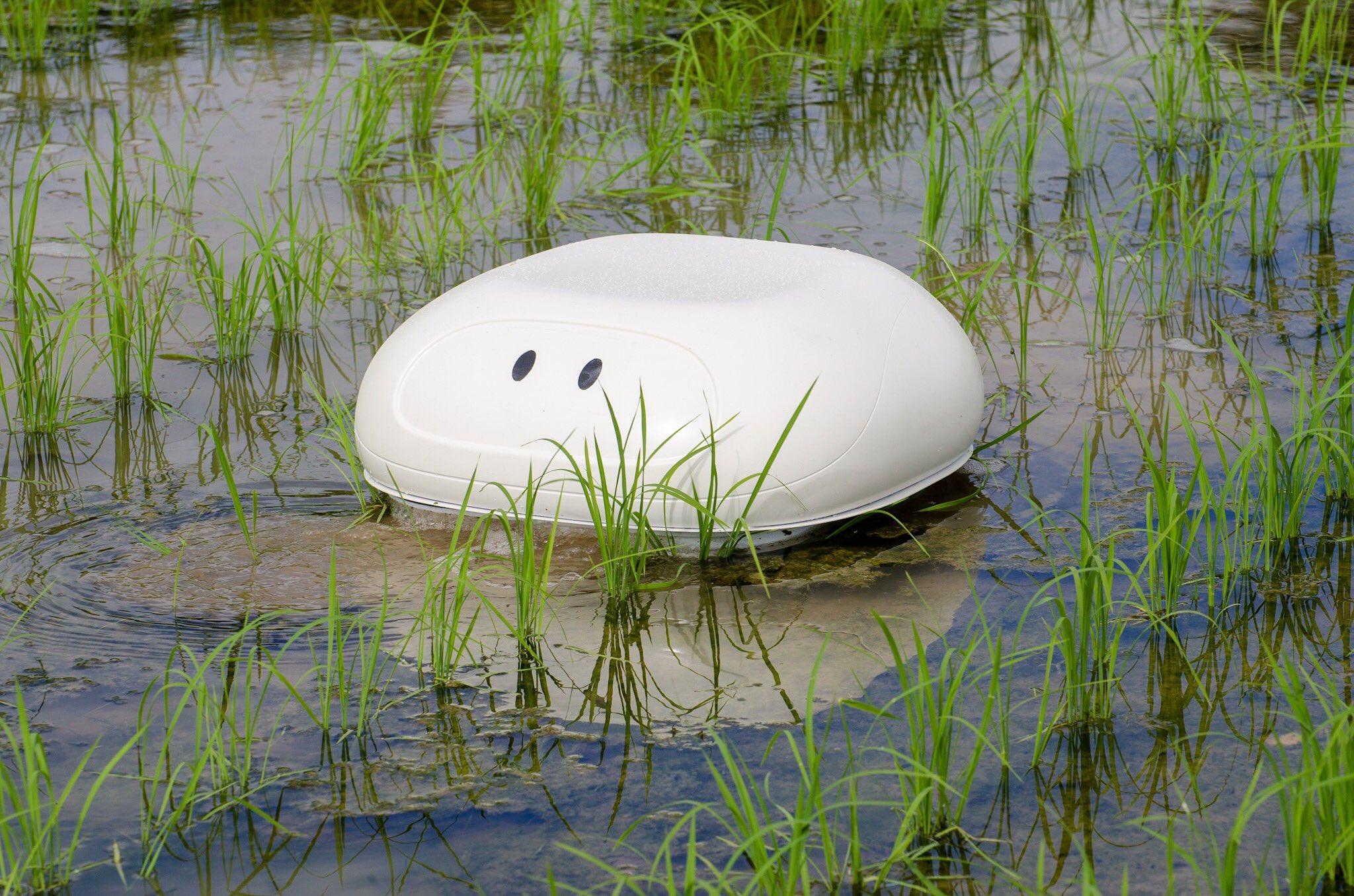 Робот баламут Nissan - эффективное средство для борьбы с сорняками на рисовых полях