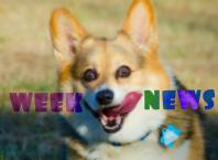 Новости недели: клон AirPods Pro, прощай Pixel и Exynos, бесплатные игры в Epic Games Store, Mi Watch и трейлеры
