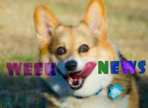 IT новости недели