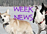 Новости недели: новые Qualcomm Snapdragon, Escobar Fold 1, Galaxy Fold в Украине, фото PS5, продажи AirPods, премьеры и трейлеры