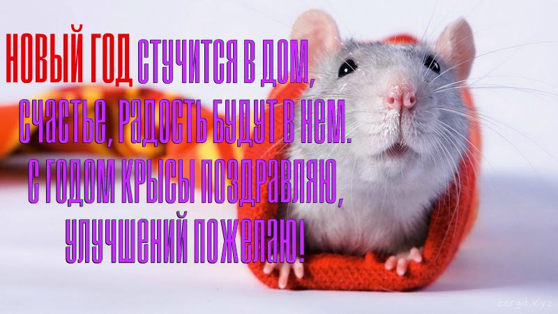 Картинки с поздравлением с Новым Годом Крысы