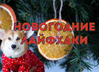 Новогодние лайфхаки: украшения из цитрусовых на Новый год