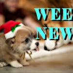 Новости недели: PS5, Xbox, Arcade, Razr,Galaxy Fold 2, гиперскутер Dragonfly, кроссовкиPuma, премьеры и трейлеры недели